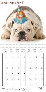 English Bulldog . Hottest XXL-Models (Wall Calendar 2015 300 × 3
