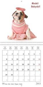 English Bulldog . Hottest XXL-Models (Wall Calendar 2015 300 × 3