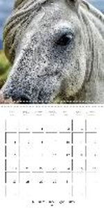 Mustangs - Wild Horses in the USA (Wall Calendar 2015 300 × 300
