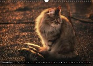 FELINE blues (Wall Calendar 2015 DIN A3 Landscape)