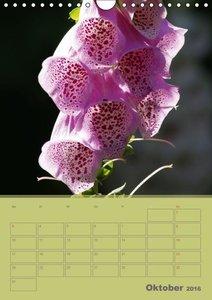 Naturbilder (Wandkalender 2016 DIN A4 hoch)