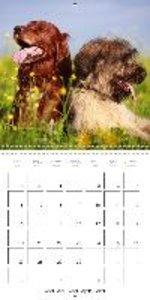 Cute animal friendship (Wall Calendar 2015 300 × 300 mm Square)