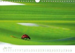 Spa for the Soul (Wall Calendar 2015 DIN A4 Landscape)