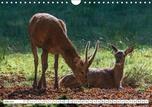 Emotional Moments: The Rut of the Deer. Part II. / UK-Version (W