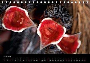 Jager, H: Philippinen - Natur und Fiesta (Tischkalender 2015