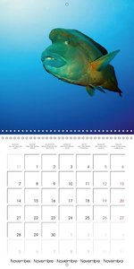 Underwater Highlights Edition 2016 (Wall Calendar 2016 300 × 300
