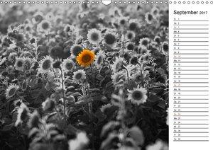 Schwarz-Weiß Malereien Terminkalender von Tanja Riedel