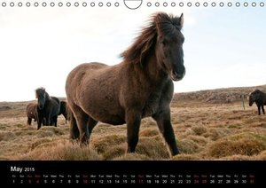 Horses of Iceland (Wall Calendar 2015 DIN A4 Landscape)