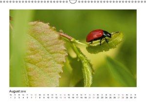 Die Welt der kleinen Tiere (Wandkalender 2016 DIN A3 quer)