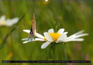 Tappeiner, K: Frühlingserwachen (Wandkalender 2015 DIN A2 qu