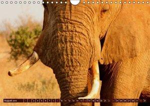 Stanzer, E: Afrikas wilde Schönheiten (Wandkalender 2015 DIN