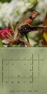 Agamids - Lizards from the Primeval Times (Wall Calendar 2015 30
