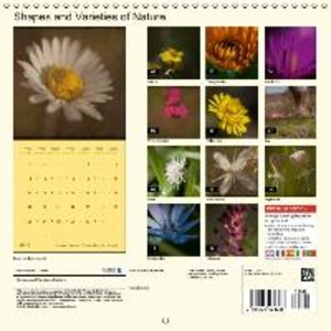 Shapes and Varieties of Nature (Wall Calendar 2015 300 &times 30