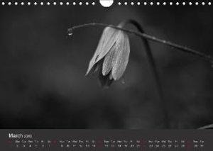 Wild Ones (Wall Calendar 2015 DIN A4 Landscape)