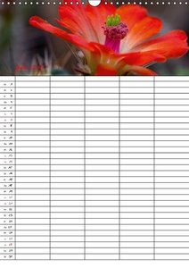 Di Chito, U: Augenblicke - Eine Naturwanderung (Wandkalender