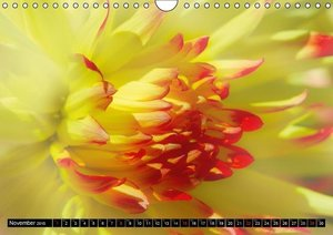 Focus on flowers (Wall Calendar 2015 DIN A4 Landscape)