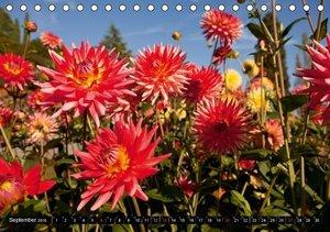 Schickert, P: Dahlia - Dahlien (Tischkalender 2015 DIN A5 qu