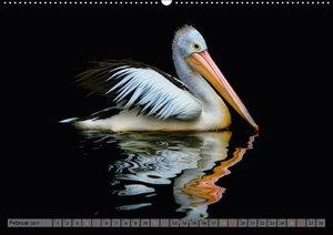 Pelikane - mächtige Gleiter