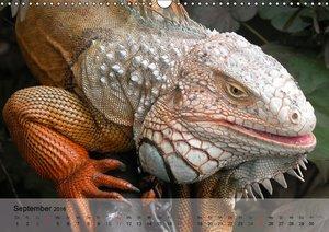 Reptilien Schlangen, Echsen und Co. (Wandkalender 2016 DIN A3 qu