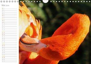 Der Flamingo Kalender (Wandkalender 2016 DIN A4 quer)