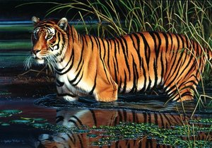 Tiger, Puzzle Standard 1.000 Teile