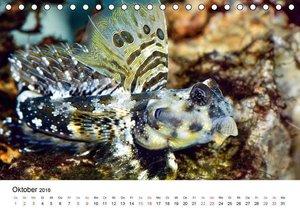 Fischzauber - Wundervolle Aquarienfische (Tischkalender 2016 DIN