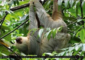 Regenwald ? Tiere im Dschungel
