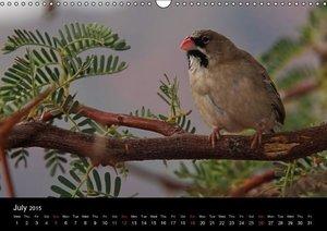African Birds (UK-Version) (Wall Calendar 2015 DIN A3 Landscape)