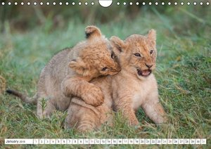 Emotional moments: Lovable lion cubs UK-Version (Wall Calendar 2