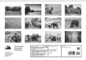 Emotionale Momente: Elefanten in black & white