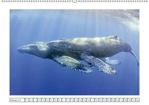 Wale: Giganten der Meere