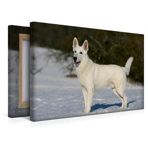 Premium Textil-Leinwand 45 cm x 30 cm quer Weißer Schäferhund