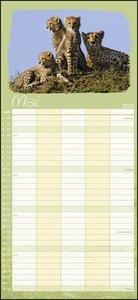 Tierfamilien Familienplaner Kalender 2020