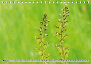 Orchideenwiese 2019 (Tischkalender 2019 DIN A5 quer)