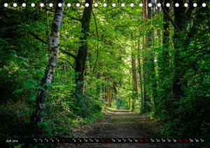 Wege des einfachen Glücks - Spaziergänge im Wald