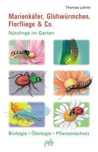 Marienkäfer, Glühwürmchen, Florfliege & Co.