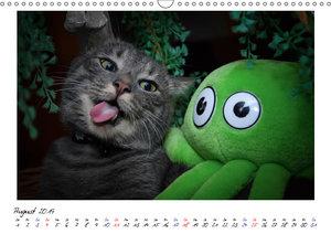 Die Launen der Katzen 2019 (Wandkalender 2019 DIN A3 quer)