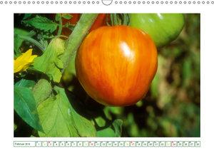 Appetitliche Tomaten - von sonnengelb bis purpurrot (Wandkalende