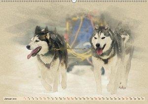 Schlittenhunde 2019 (Wandkalender 2019 DIN A2 quer)