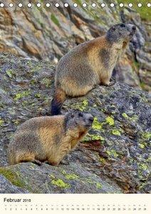 STREIFZUG im Land der Murmeltiere