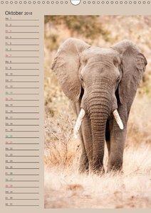 Südafrika und seine Tierwelt