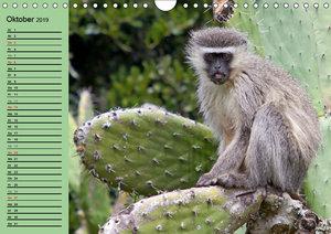 Affen in Afrika (Wandkalender 2019 DIN A4 quer)