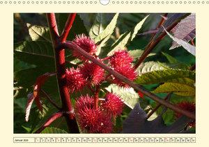 Früchte-Allerlei an Baum, Strauch und Co.