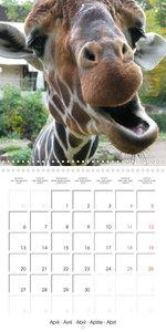 Pet Selfies (Wall Calendar 2020 300 × 300 mm Square)