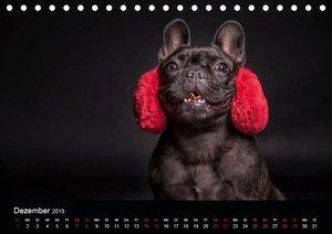 French Bulldog (Tischkalender 2019 DIN A5 quer)