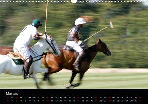 Polo Pferde + Aktion 2020