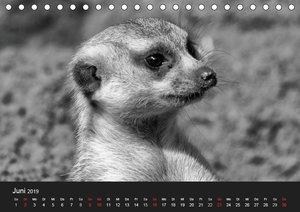 Einzigartige Tierportraits (Tischkalender 2019 DIN A5 quer)