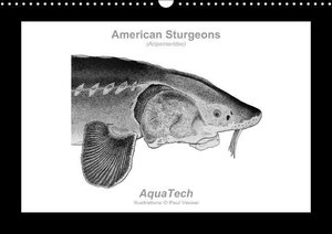 American Sturgeons (Acipenseridae): Fish as Art (Wall Calendar p