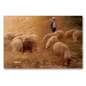 Premium Textil-Leinwand 90 cm x 60 cm quer Hirte und Herde