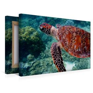 Premium Textil-Leinwand 45 cm x 30 cm quer Grüne Meeresschildkrö